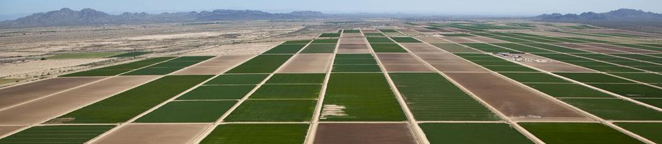 x210-casa-grande-crops