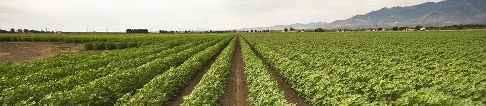 x210-crop-field